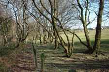 George's woodland before permaculture